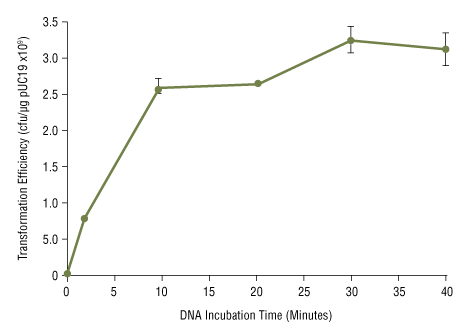 Effect of DNA incubation time on NEB 5-alpha competent E.coli transformation efficiency: