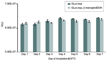 Figure 4: Stability of Gaussia Luciferase at 37°C over a period of seven days.