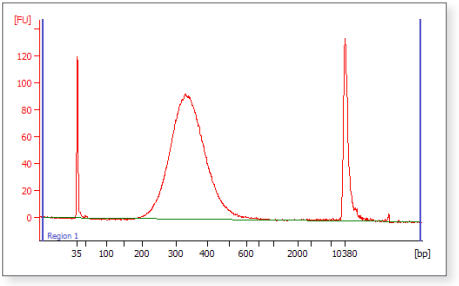 Figure 2: Final Library size distribution using AMPure XP Bead Size Selection.