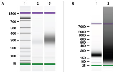 NEBNext Ultra™ DNA provides high library yields even with low inputs and difficult samples