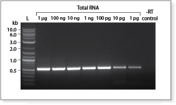 Generate high quality cDNA even with very low amounts of starting RNA