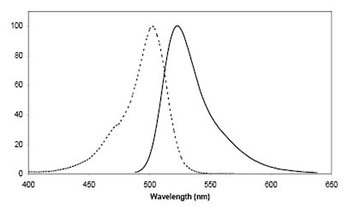 Figure 2:Excitation (dotted line) and emission spectra of CoA 488 coupled to ACP-tag in buffer at pH 7.4