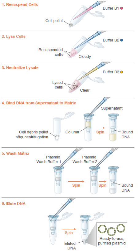 New England Biolabs (UK) Ltd - Monarch® Plasmid Miniprep Kit