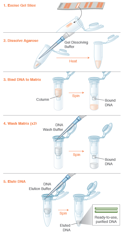 Monarch® DNA Gel Extraction Kit | NEB