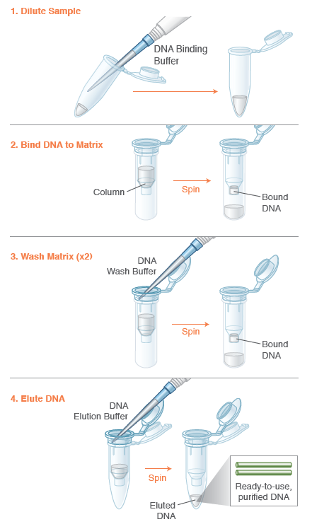 Monarch® PCR & DNA Cleanup Kit (5 μg) | Purification Kits ...