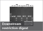 Downstream restriction digest