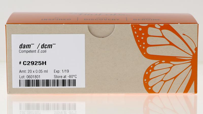 dam dcm Competent E coli