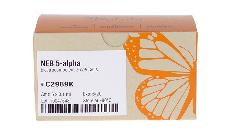 NEB 5 alpha Electrocompetent E coli