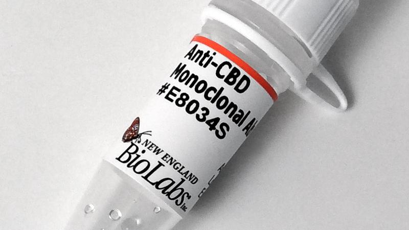 Anti CBD Monoclonal Antibody
