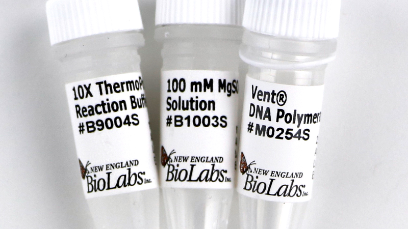 Vent DNA Polymerase