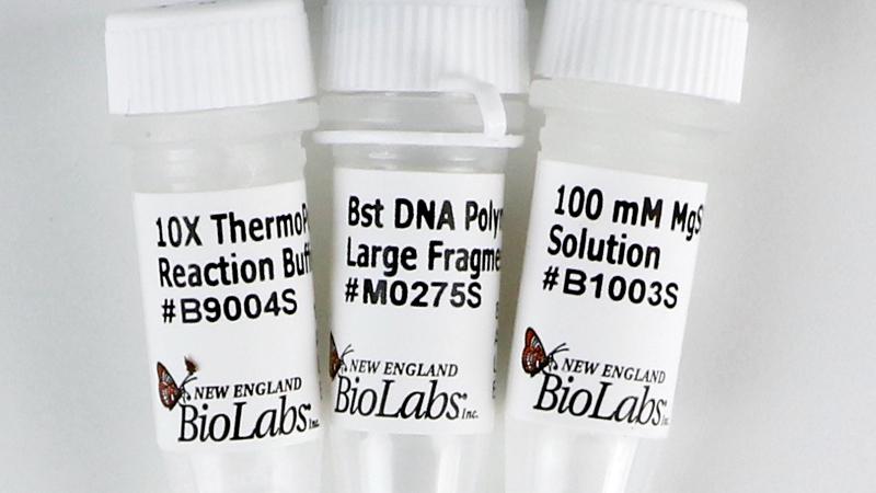 Bst DNA Polymerase Lg Frag