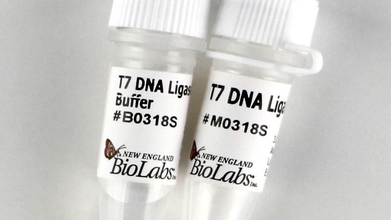T7 DNA Ligase