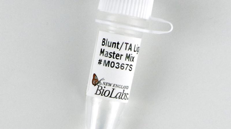Blunt TA Ligase Master Mix