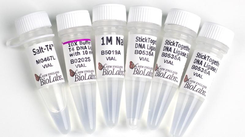 Salt T4 DNA Ligase
