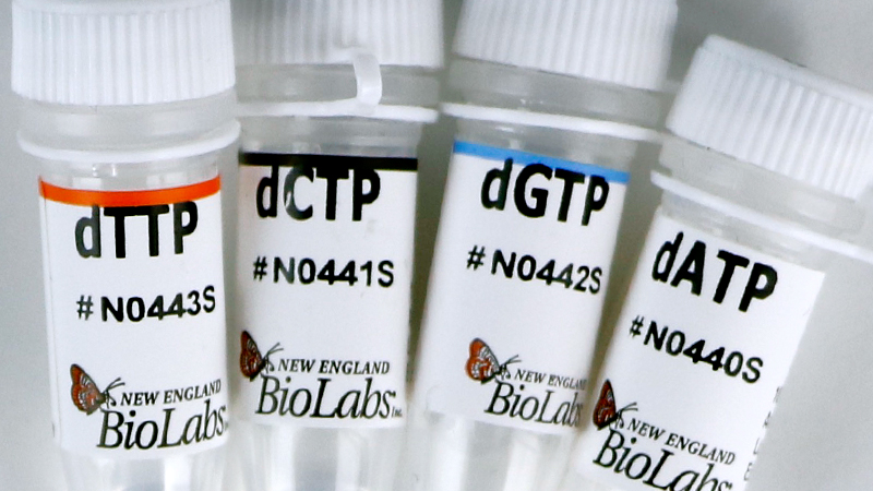 Deoxynucleotide Solution Set
