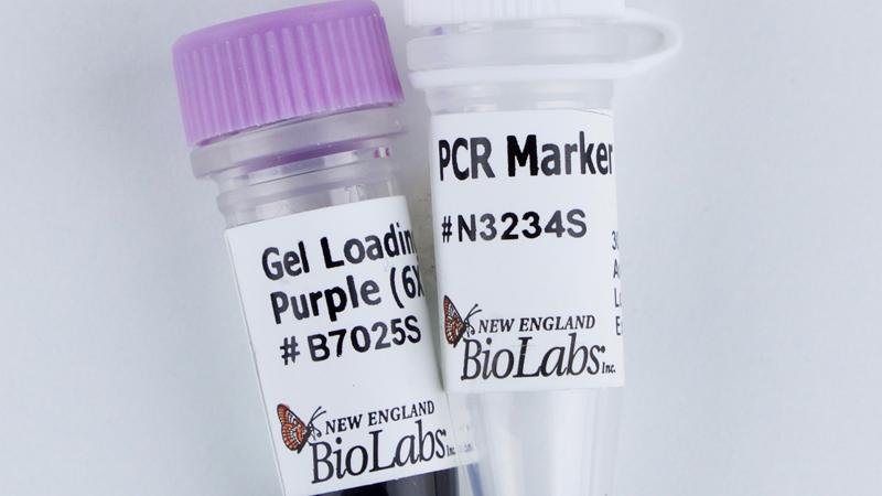 PCR Marker