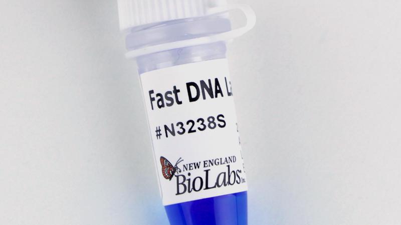 Fast DNA Ladder