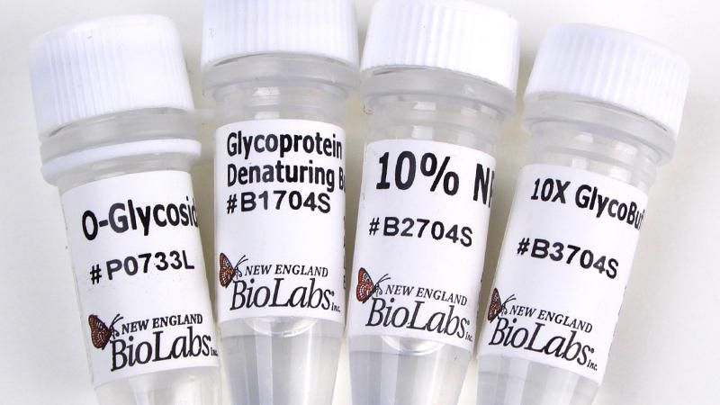 O Glycosidase