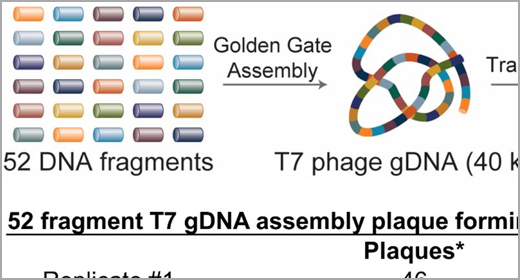 Golden Gate Assembly of 52 DNA fragments