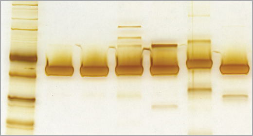 Quality_T4_DNA_Ligase_260x140