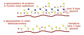 O-Glycosylation of Proteins diagram