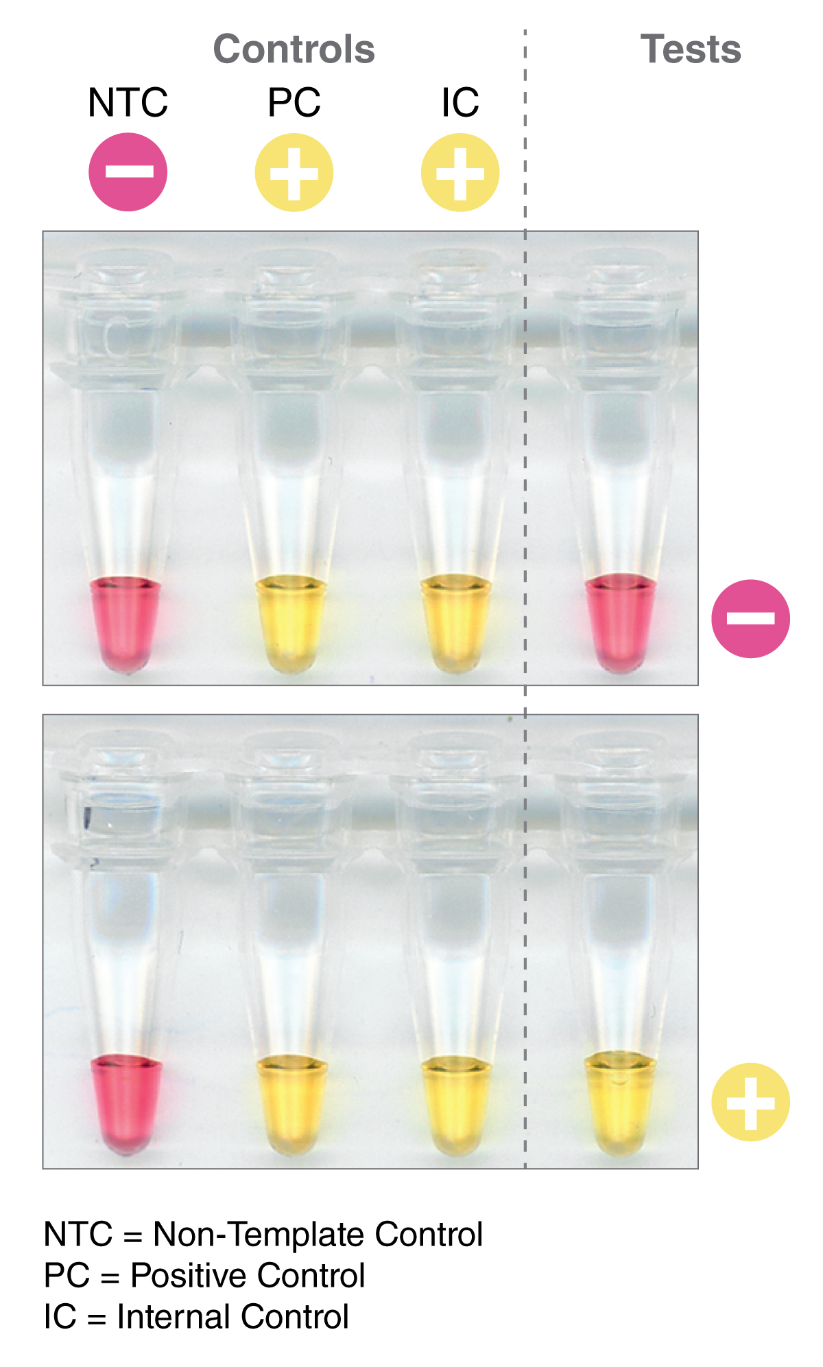 SARS-CoV-2 Rapid Colorimetric LAMP Assay Kit showing positive and negative samples
