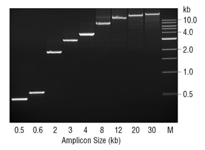 Amplification of Large PCR prodcuts