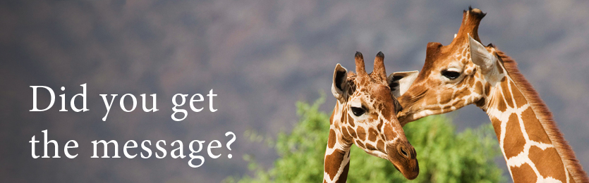RNACampaign_Giraffes_Ban_835x260