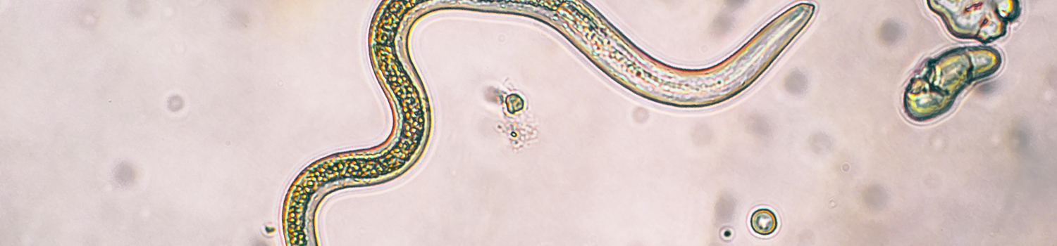 parasitology_banner