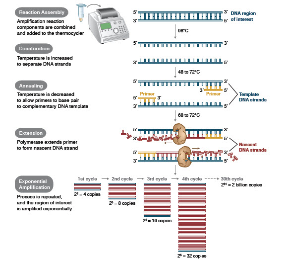 Foundations of Molecular Cloning - Past, Present and Future