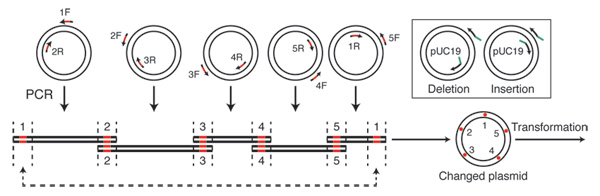 changes to a desired dna using gibson assembly diagram