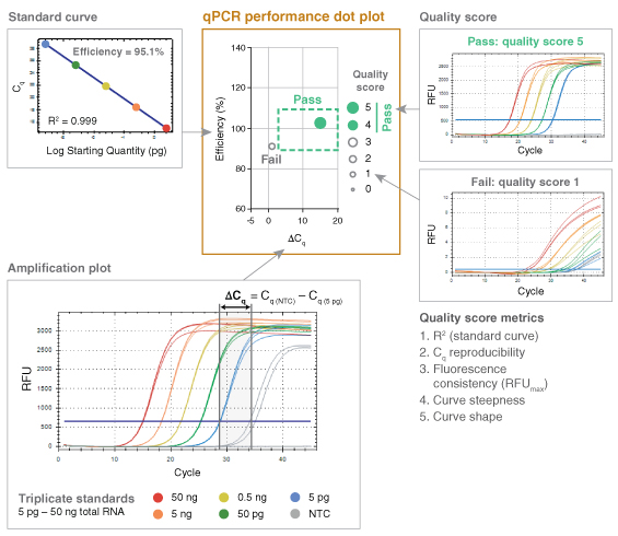 translate qPCR data diagram
