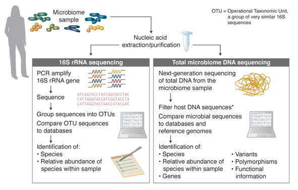 Addressing Challenges In Microbiome Dna Analysis Neb