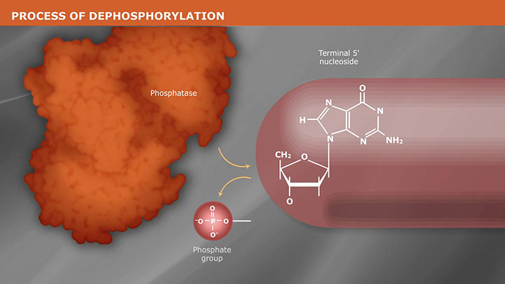 DephosphorylationVideo_thumb