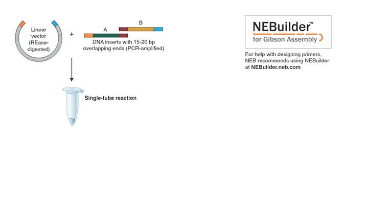 Gibson Assembly Master Mix Neb
