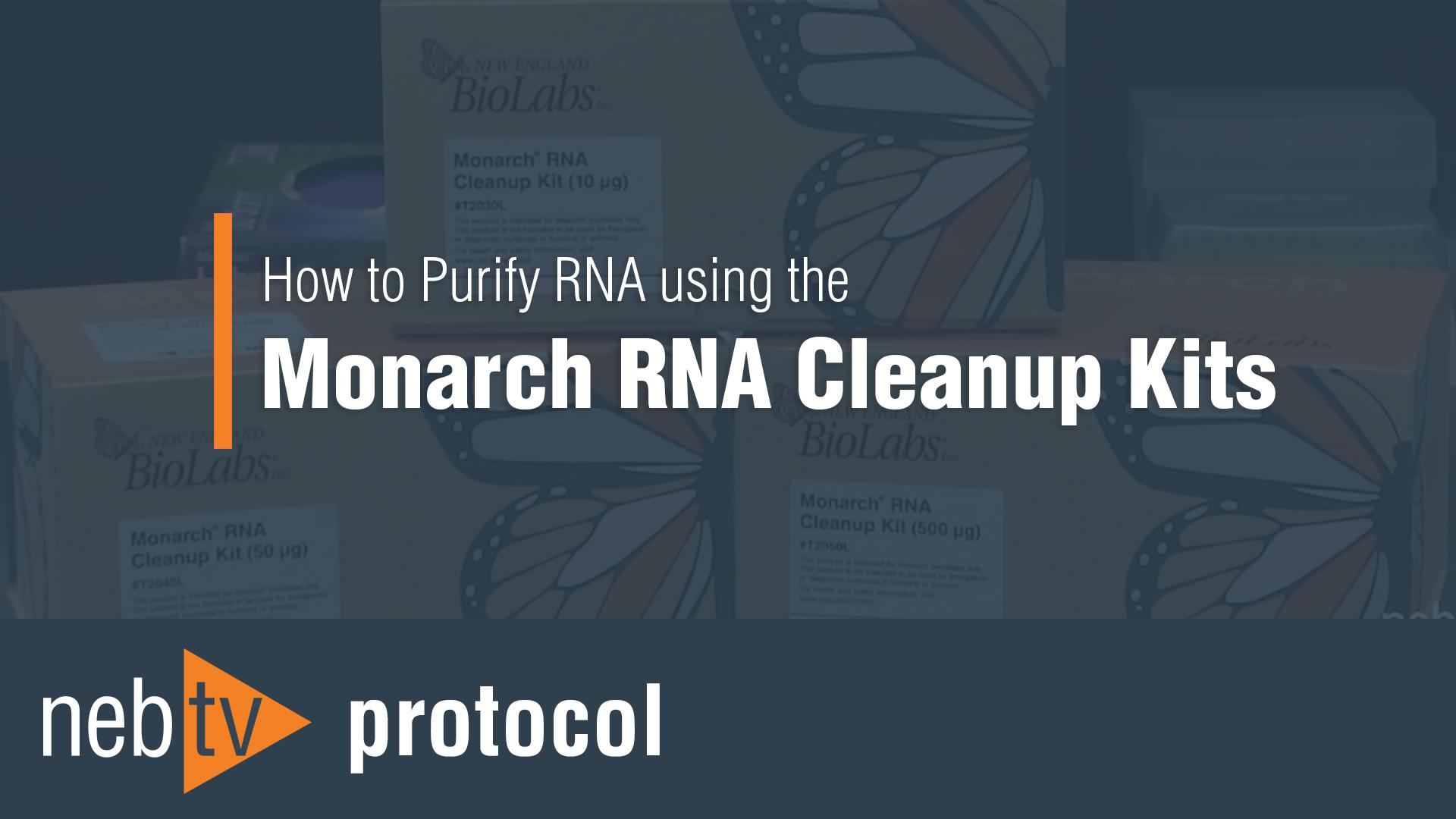 NEBTV_Protocol_HowToPurifyRNAusingTheMonarchRNAcleanupKit_1920