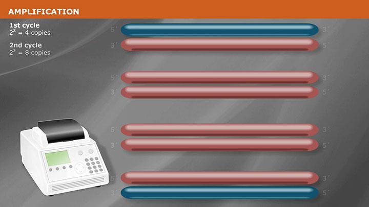 PCR Cloning Method | NEB