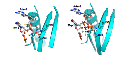 Crystal structure of the 8 bp specific_feature
