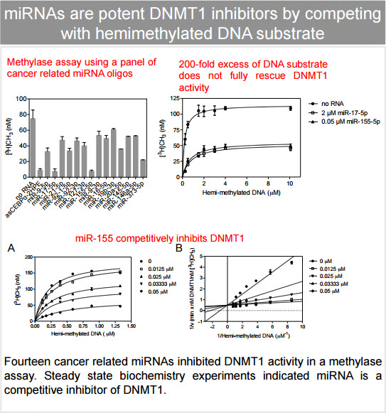 Small RNA-mediated DNA methyltransferase 1 inhibition causes DNA methylation