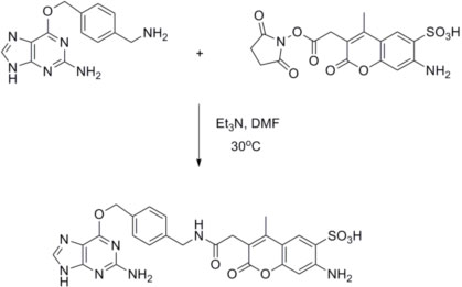 Coupling of BG-NH2