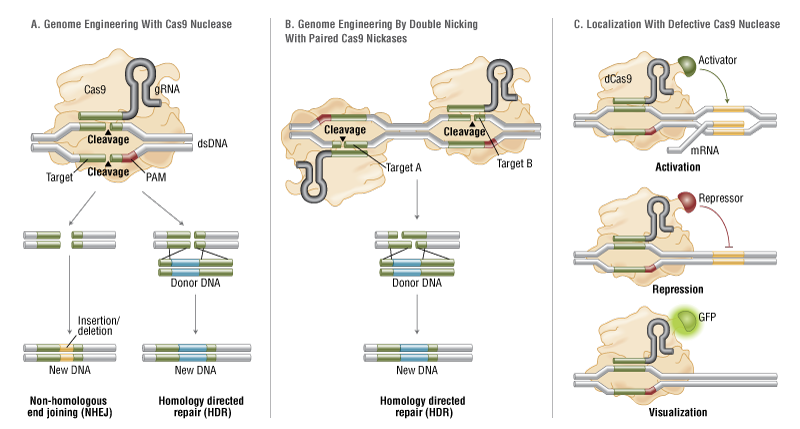 crispr/cas9 for editing