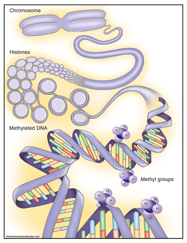 What are the enzymes involved in dna replication