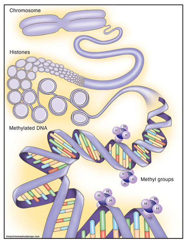 Epigenetics - Expanding on Genomic Foundations | NEB