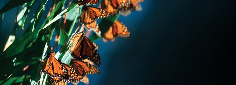 Migrate to Monarch