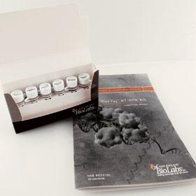 OneTaq RT PCR Kit