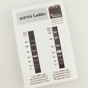 dsRNA Ladder