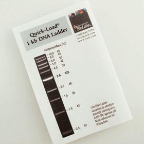 Quick Load 1 kb DNA Ladder