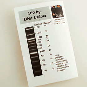 100 Bp Dna Ladder Bing