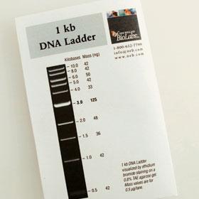 1 kb DNA Ladder